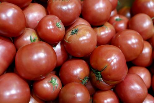 原料のトマト
